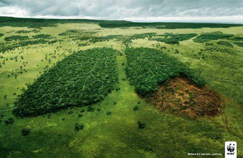 """Képtalálat a következőre: """"fa oxigén"""""""